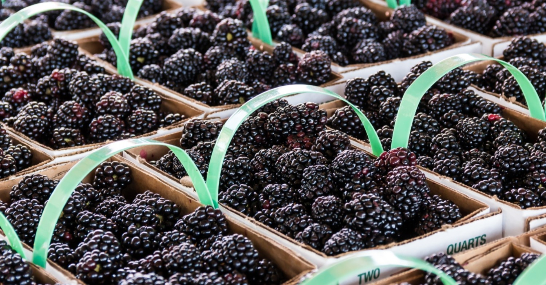 small baskets of fresh blackberries